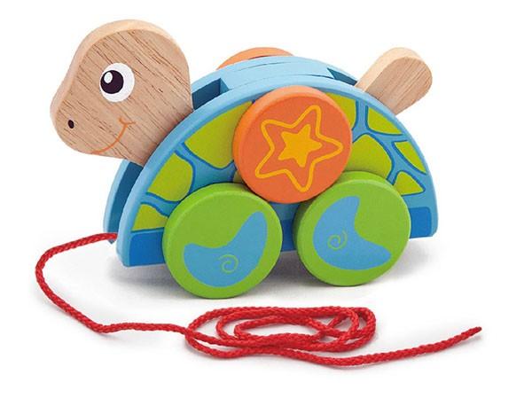 Ziehtier Schildkröte